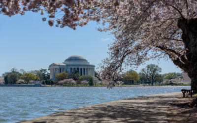 April 21st – Cherry Blossom and Picnic at the Mall